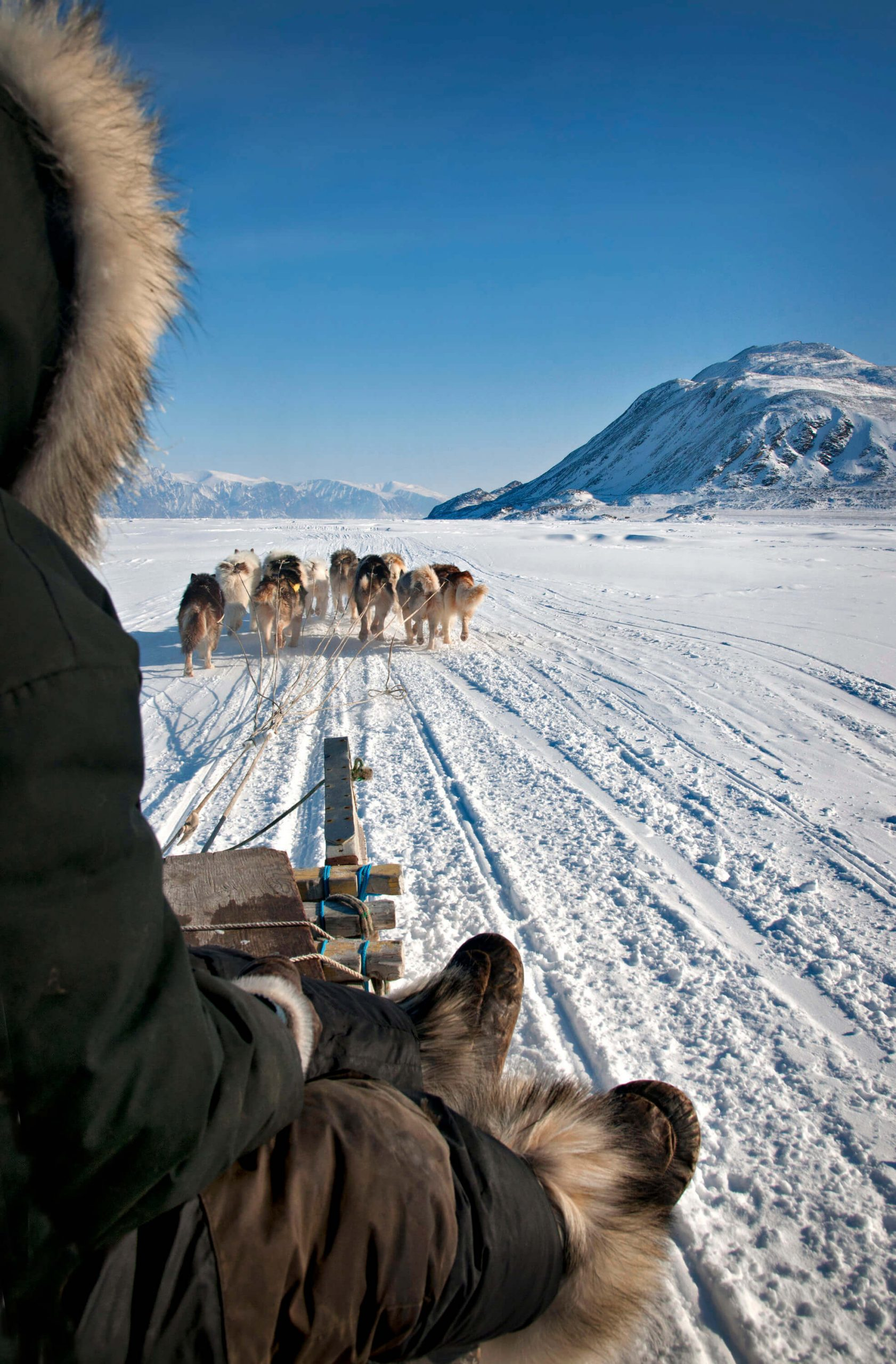 dog team with musher