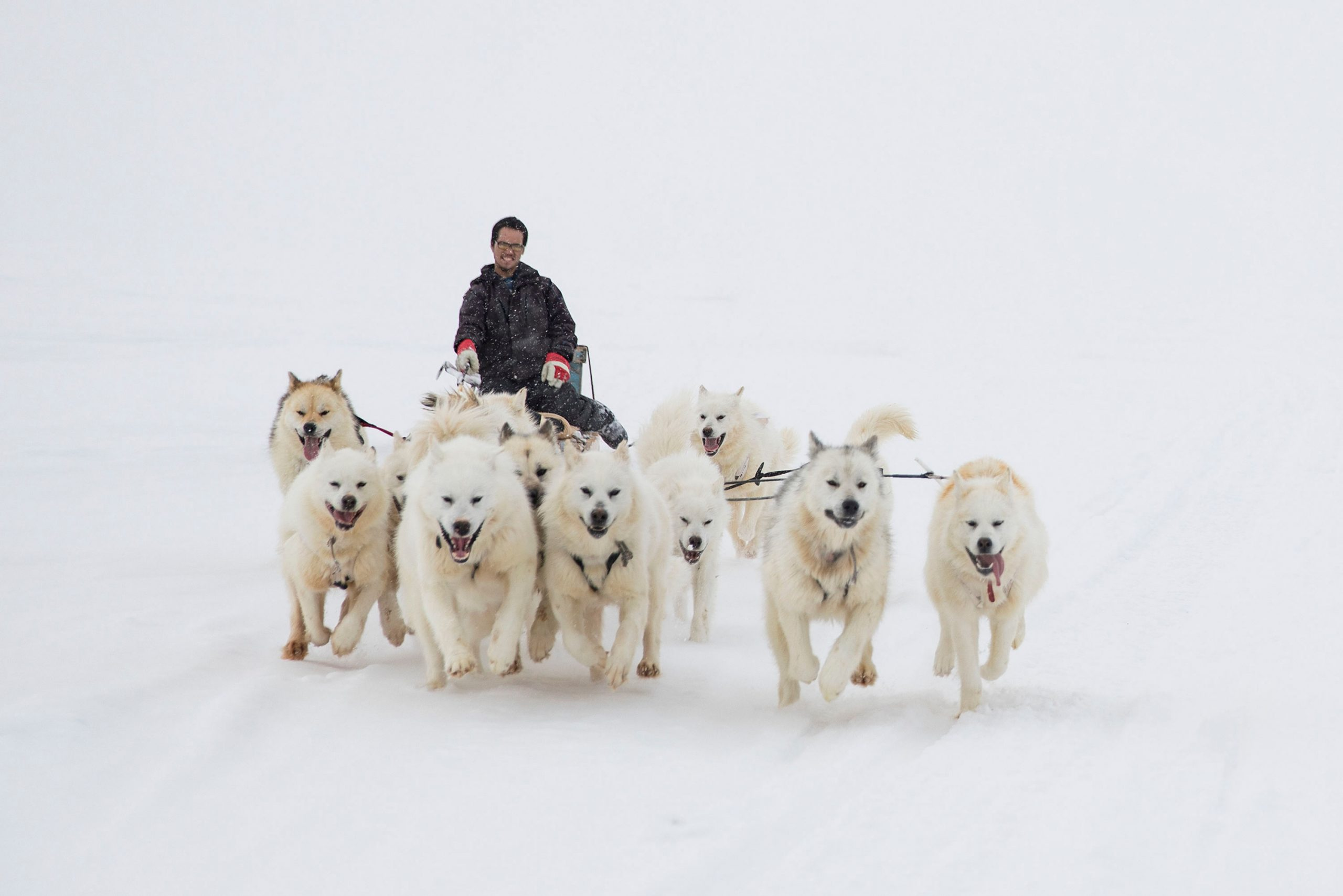 Dog sled team running with musher
